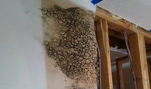 Mold Growth Caused By Ceiling Leak