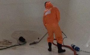 Mold Damage Restoration Cleanup