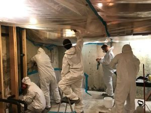 Mold Cleanup Team At Work In A Basement