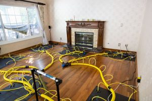 A Home During Mold Remediation Procedures